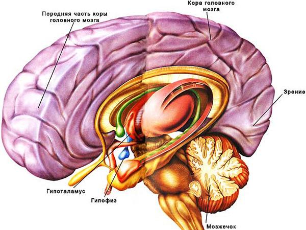 Синдром Шихана — симптомы, гинекология, лечение