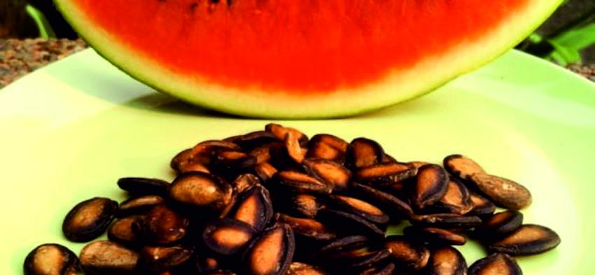 арбуз и семена